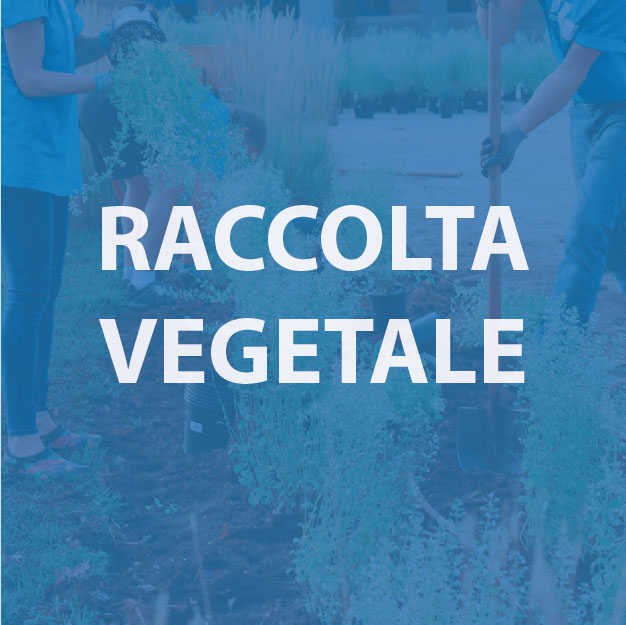 raccolta vegetale - morandi sagl